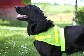 Reflective vest made ​​of nets for fur dogs
