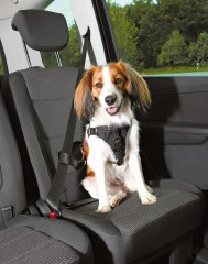 Car Harness Dog Protect