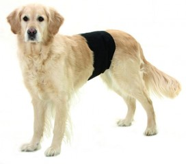 Male dog protection / splash protector