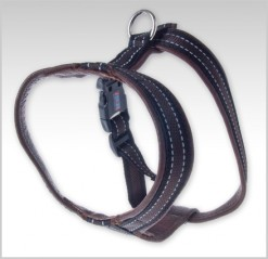 Y-harness leather with reflective