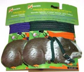 Guinea pigs harness